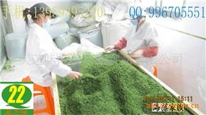 (福建.霞蒲)青海苔.海青菜.石莼.绿藻.绿菜碎片