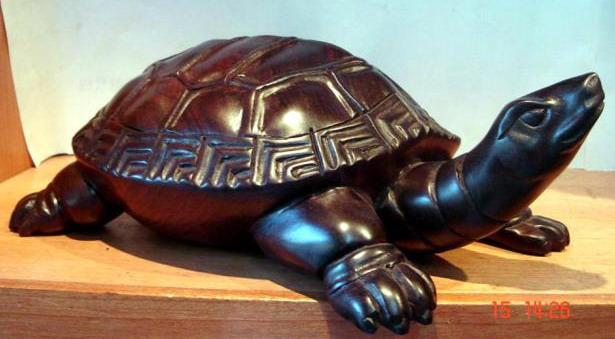 动物 龟 615_339