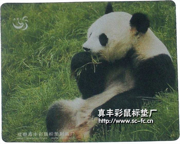 大熊猫 动物 700