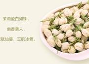 中国茶叶博览会在济南开幕 福州茉莉花茶飘香
