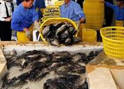 渔业局联合公安边防大队加强福州水产品安全稳定