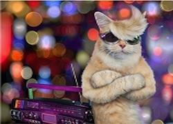 天猫国际:禁止出现免单、返现等字样