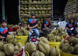 中国吃货1分钟抢光天猫上8万个泰国金枕头榴莲