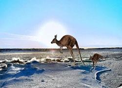 6个澳大利亚和新西兰最受欢迎的电商网站