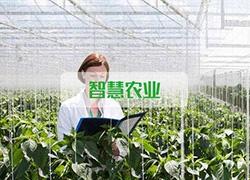 福建省供销社牵手阿里云,进一步打造智慧农业