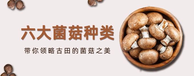 六大菌菇种类