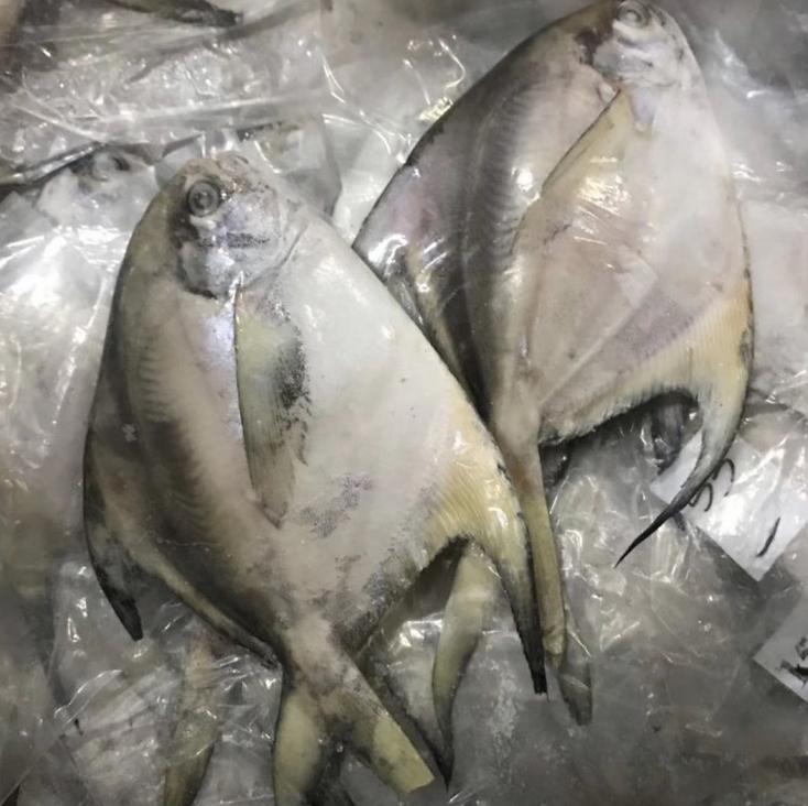 白鯧斗鯧鯧魚批發一手貨源水產批發價格低質量好